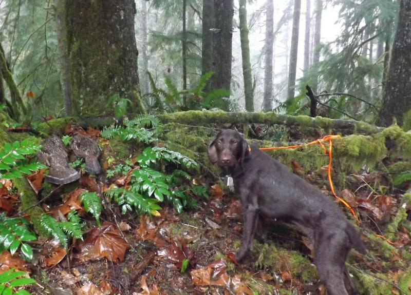 Alice after a Western Washington Grouse Hunt