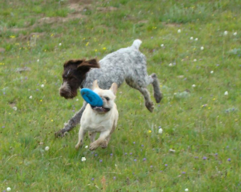 Abba and Wizard playing Frisbee