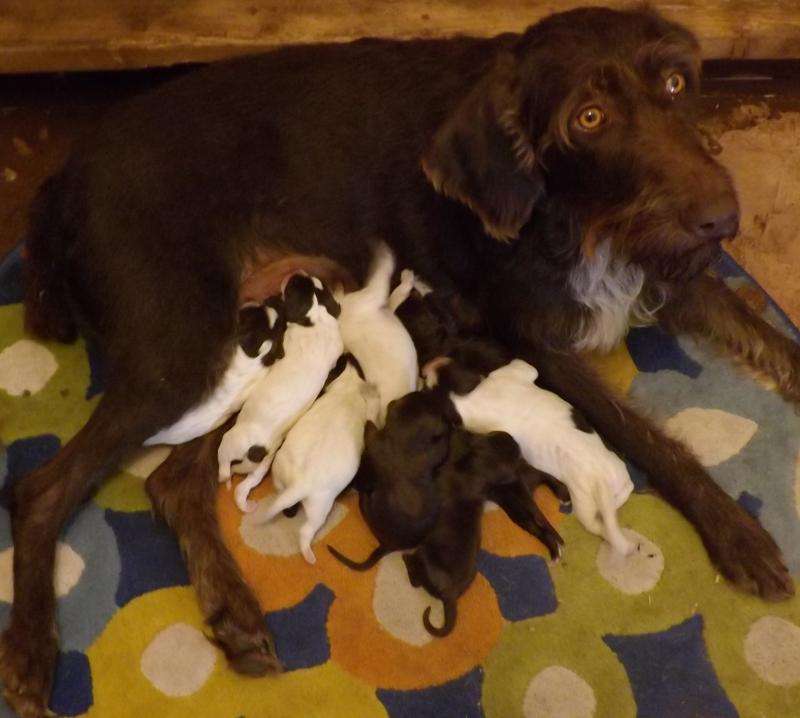 Flirt with her puppies--1 day old