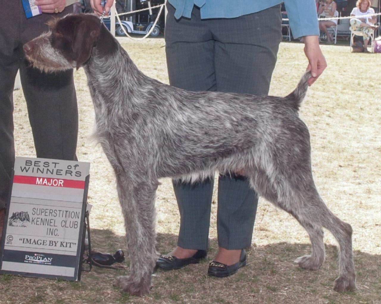 Idawire German Wirehaired Pointers - Idawire Show Champions